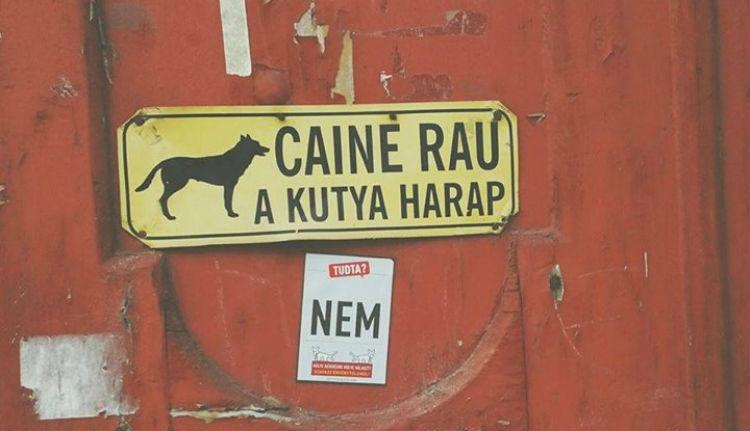 Már Facebook-oldala is van az erdélyi kétfarkú kutyáknak