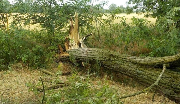 Jó sok dolga volt a katasztrófavédelemnek a viharos időjárás miatt