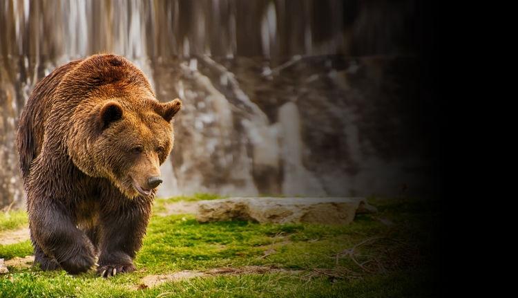 Vadászott, de rossz vége lett: megölte a medve