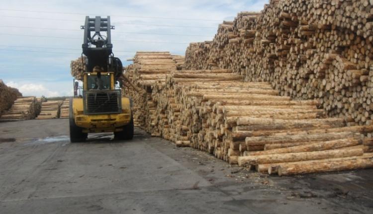 Óriási összegű károkozással gyanúsítják a Holzindustrie Schweighofert