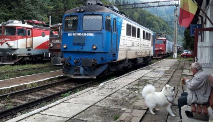 Fák bénították meg a vasúti közlekedést az ország legforgalmasabb vasúti fővonalán