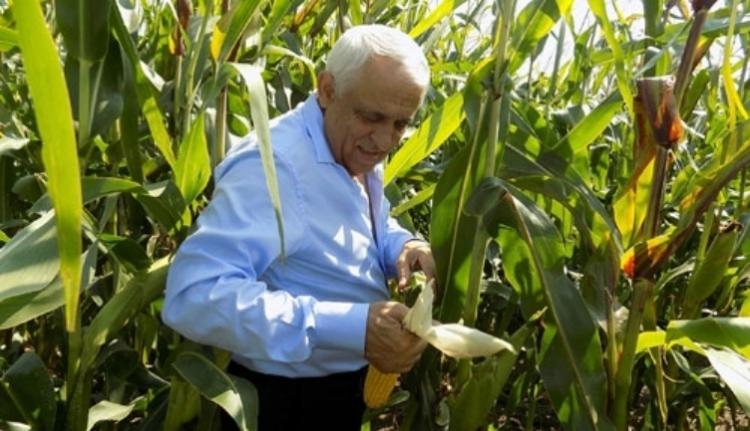 Tényleg hamis adatokkal akarja a kukorica uniós királyává koronáztatni magát Románia?
