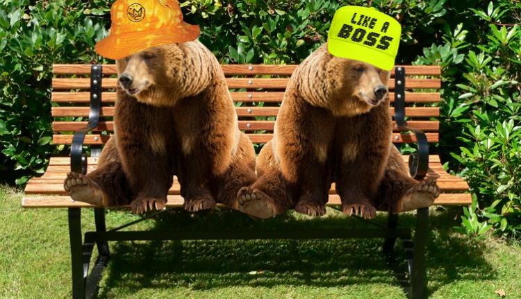 Európában egyedülálló medvemenhelyet (!) hoznak létre Brassó mellett