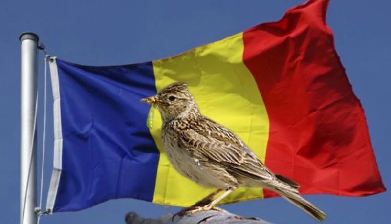 Úgysem esztek többé romániai madarakból készült pacsirtanyelv-pástétomot, kedves olaszok!