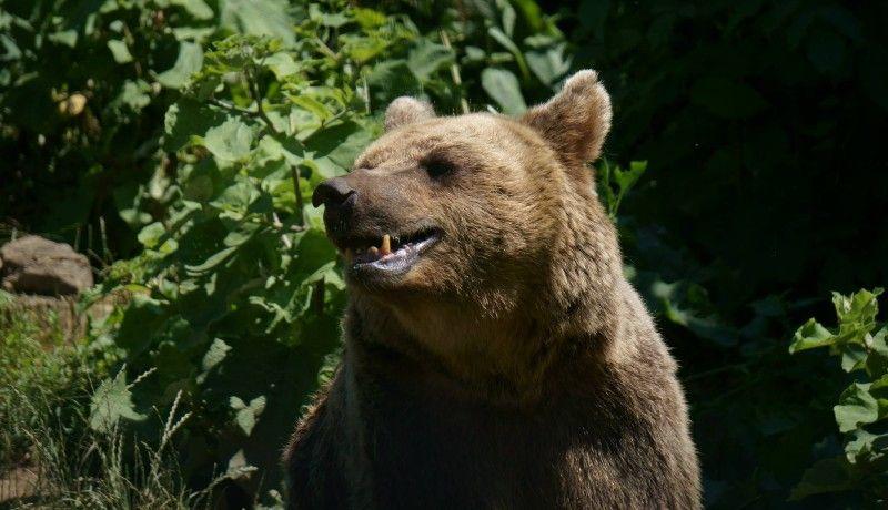 A saját halálos ítéletét is aláírta az embert ölő medve