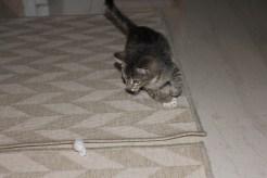 gatos 4