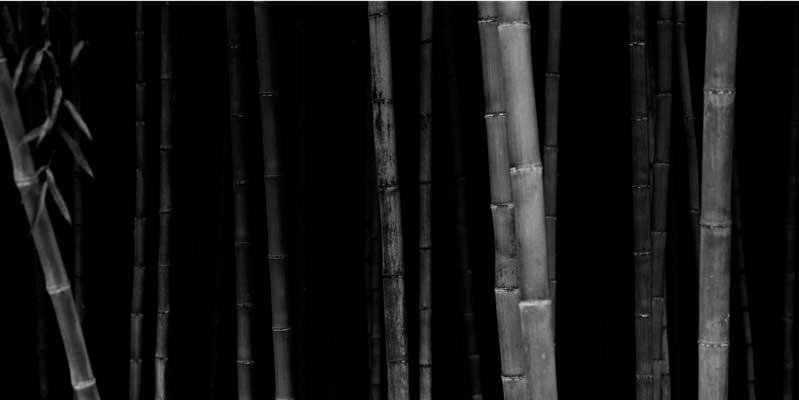 fototentoonstelling-bamboo-Choi-Byung-Kwan-elliothalls