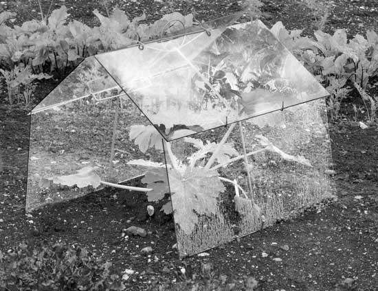 Helen-Sear-foto-agenda-Cold-Frame-Pennings