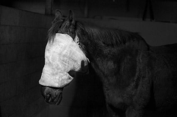 tom-callemin-tegenboschvanvreden-fototentoonstelling
