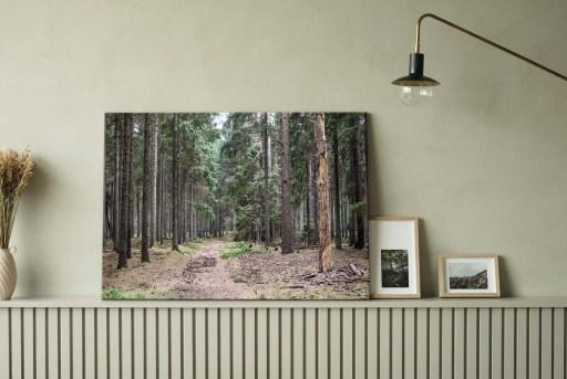 Fotokunst skov
