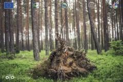 Plener-02-FOTO-Przygoda-w-Świdwinie-Wiosna-19-0723b