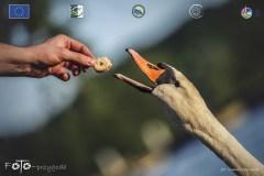 Plener-04-FOTO-Przygoda-w-Świdwinie-Wiosna-19-2153b