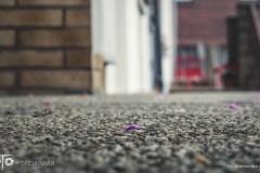 FOTO-Przygoda-w-Połczynie-Zdroju-Wiosna-19-Aleksandra-Malesza-027a