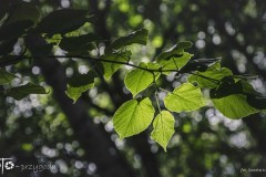 FOTO-Przygoda-w-Połczynie-Zdroju-Wiosna-19-Dorota-Kijowska-062a
