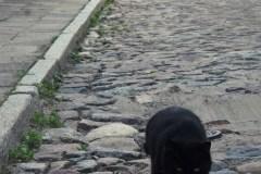 FOTO-Przygoda-w-Połczynie-Zdroju-Wiosna-19-Dorota-Kowalska-042a