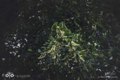 FOTO-Przygoda-w-Połczynie-Zdroju-Wiosna-19-Elżbieta-Wiśniewska-018a