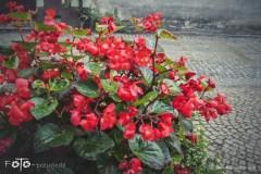 FOTO-Przygoda-w-Połczynie-Zdroju-Wiosna-19-Małgorzata-Klusek-010a