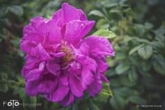 FOTO-Przygoda-w-Połczynie-Zdroju-Wiosna-19-Małgorzata-Klusek-015a