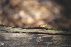 FOTO-Przygoda-w-Połczynie-Zdroju-Wiosna-19-Marcin-Dasiniewicz-020a