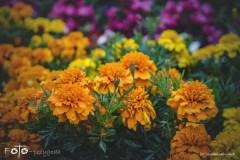 FOTO-Przygoda-w-Połczynie-Zdroju-Wiosna-19-Monika-Milczarek-056a