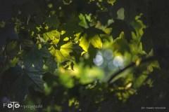 3-FOTO-Przygoda-w-Połczynie-Zdroju-Wiosna-19-0535b