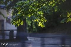 3-FOTO-Przygoda-w-Połczynie-Zdroju-Wiosna-19-0546b