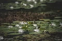 3-FOTO-Przygoda-w-Połczynie-Zdroju-Wiosna-19-0783b