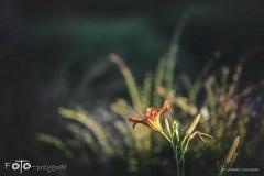 5-FOTO-Przygoda-w-Połczynie-Zdroju-Wiosna-19-2067b