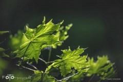 5-FOTO-Przygoda-w-Połczynie-Zdroju-Wiosna-19-2092b