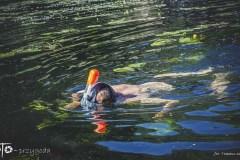 7-FOTO-Przygoda-w-Połczynie-Zdroju-Wiosna-19-2267b