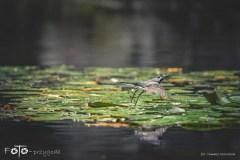 7-FOTO-Przygoda-w-Połczynie-Zdroju-Wiosna-19-2671b