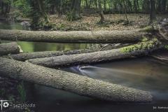 FOTO-Przygoda-w-Świdwinie-Wiosna-19-Bartosz-Głasek-015a