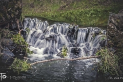 FOTO-Przygoda-w-Świdwinie-Wiosna-19-Ewa-Prygiel-066a
