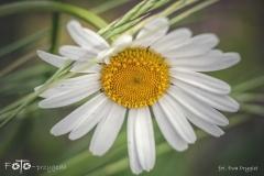 FOTO-Przygoda-w-Świdwinie-Wiosna-19-Ewa-Prygiel-069a