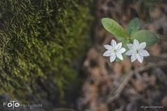 FOTO-Przygoda-w-Świdwinie-Wiosna-19-Janusz-Wielgosz-024a