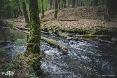 FOTO-Przygoda-w-Świdwinie-Wiosna-19-Janusz-Wielgosz-028a