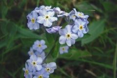 FOTO-Przygoda-w-Świdwinie-Wiosna-19-Katarzyna-Goździela-036a