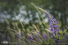 FOTO-Przygoda-w-Świdwinie-Wiosna-19-Katarzyna-Staniszewska-041a