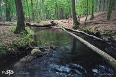 FOTO-Przygoda-w-Świdwinie-Wiosna-19-Krzysztof-Weinar-049a