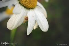 FOTO-Przygoda-w-Świdwinie-Wiosna-19-Magda-Jeziorna-025a