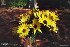 FOTO-Przygoda-w-Świdwinie-Wiosna-19-Magdalena-Jakubczak-006a