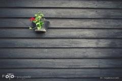 FOTO-Przygoda-w-Świdwinie-Wiosna-19-Magdalena-Kaliś-072a