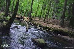 FOTO-Przygoda-w-Świdwinie-Wiosna-19-Magdalena-Warcholska-070a