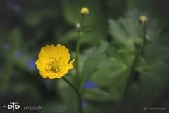 FOTO-Przygoda-w-Świdwinie-Wiosna-19-Marta-Mroczek-005a