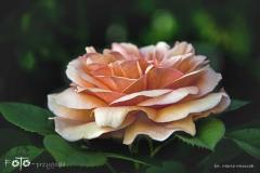 FOTO-Przygoda-w-Świdwinie-Wiosna-19-Marta-Mroczek-025a