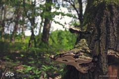 FOTO-Przygoda-w-Świdwinie-Wiosna-19-Milena-Hołojuch-012agotowe