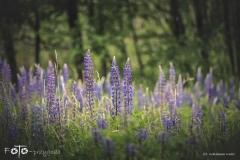 FOTO-Przygoda-w-Świdwinie-Wiosna-19-Waldemar-Kaliś-052a