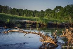 FOTO-PSTRYK - Dolina Rzeki Iny [Maj 18] 124b