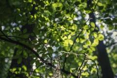 FOTO-PSTRYK - Dolina Rzeki Iny [Maj 18] 176b