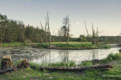 FOTO-PSTRYK - Dolina Rzeki Iny [Maj 18] 259b